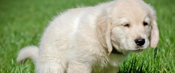 puppy-poop-2 copy